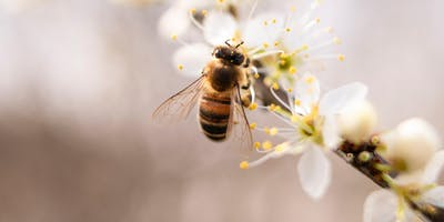 Landscaping for Pollinators