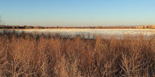 Birding Fall Specialties in NE Colorado