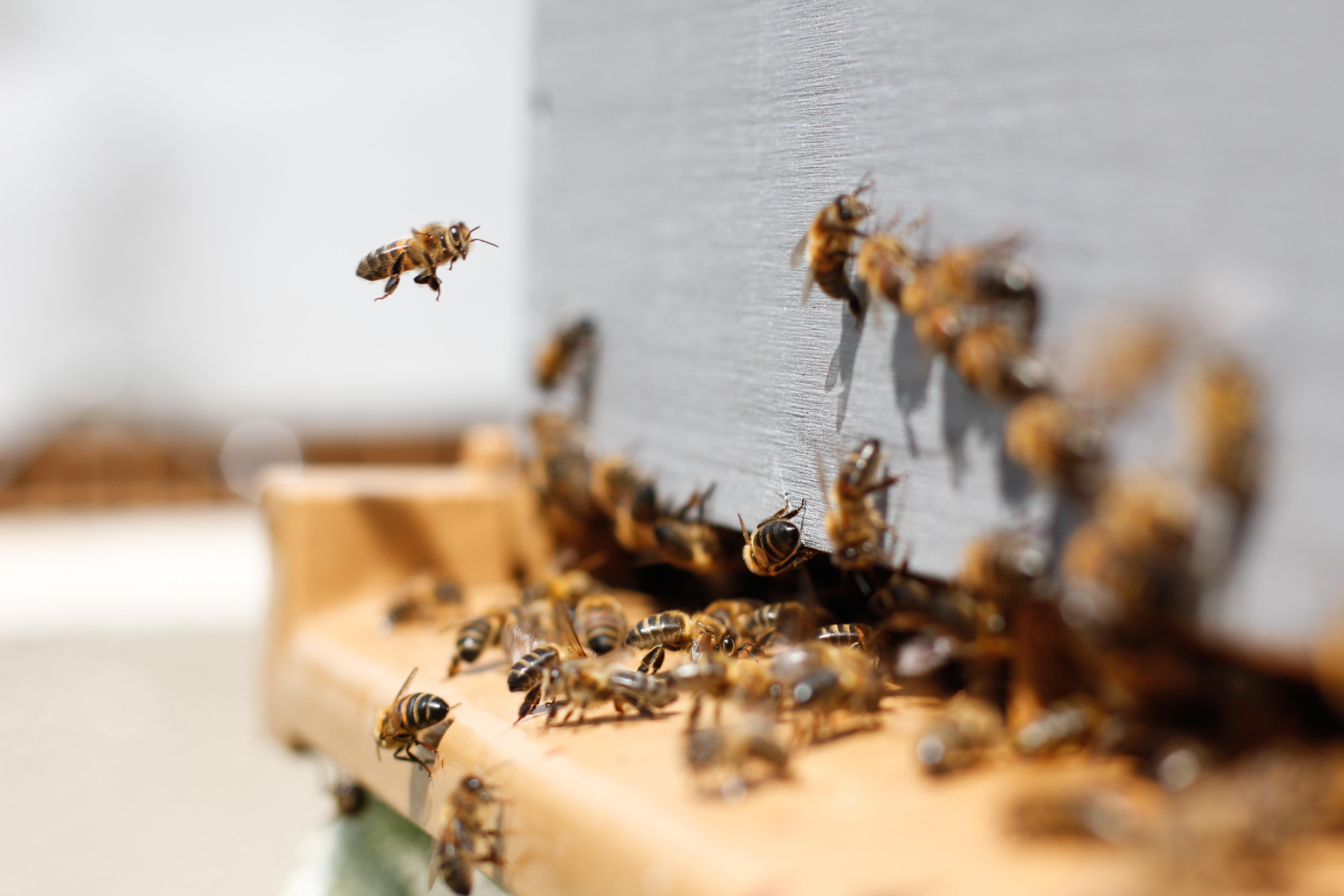 Témoignages: Il y a plusieurs ruches à Nice,