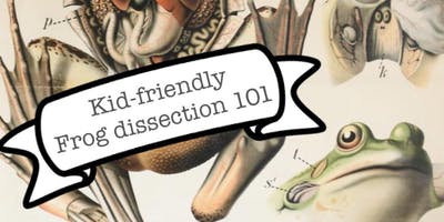 Kid-Friendly Frog Dissection 101
