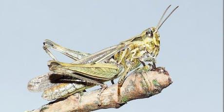 Shieldbug, Grasshopper and Cricket Field Identification tickets