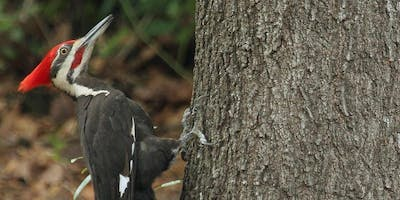 Lunch & Learn: Landscaping to Attract Wildlife