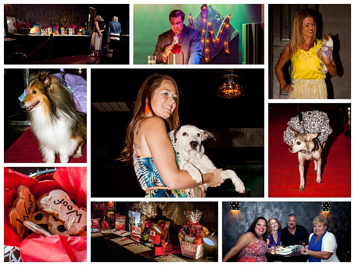 5th Annual Struttin' for Strays image