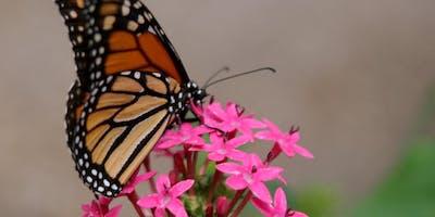 Lunch & Learn: Butterfly Gardening
