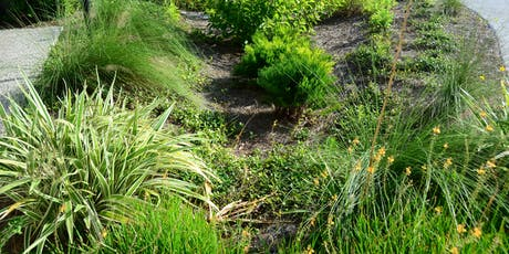 Lunch & Learn: Landscape Design with Rain Gardens tickets
