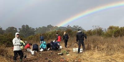 Volunteer at Arastradero Preserve: Habitat Restoration