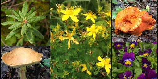 Initiation à la cueillette de plantes et champignons sauvages d'été