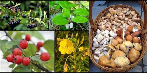 Initiation à la cueillette de plantes et champignons sauvages d'automne