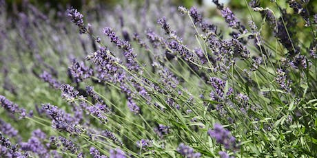 Work and Learn: Lavender Care tickets