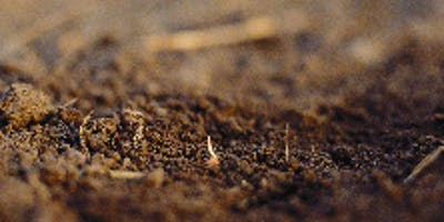 Soils-the garden foundation
