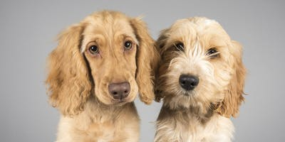 Pet Portrait Event (New Mills) - A day to remember for you & your pet