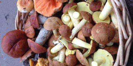 Atelier d'initiation à l'identification des champignons sauvages tickets