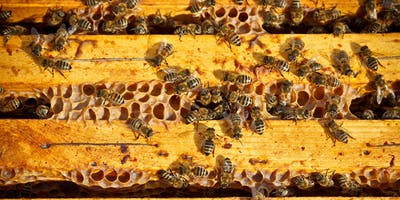 April - Introduction to Beekeeping Class at The Bee Store