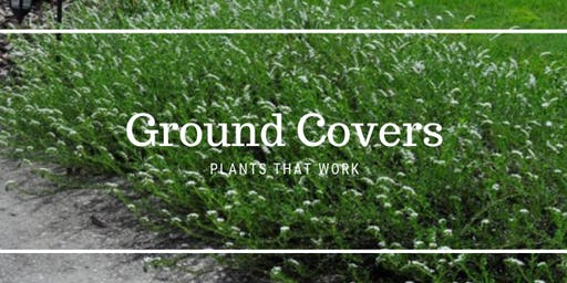 Ground Covers - Plants That Work
