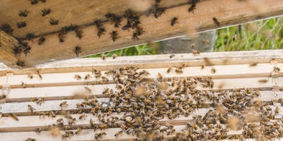 How to perform a biosecurity inspection & packing your bees down for winter