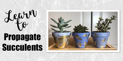 Learn to Propagate Succulents