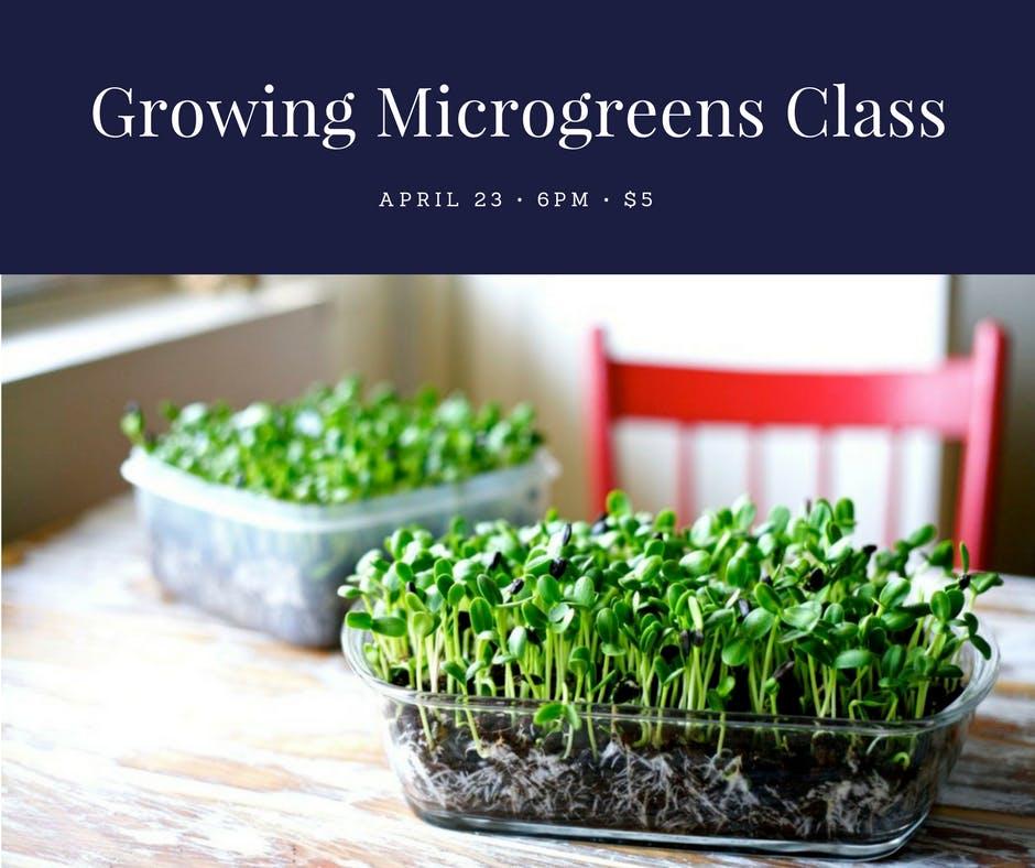 Year-Round Indoor Salad Gardening Class - Mor