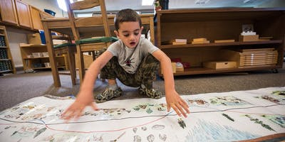 Why Montessori for the Elementary Years?