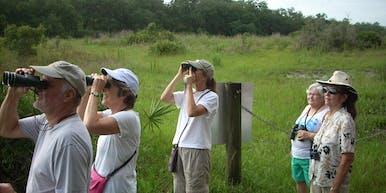 Wild Wings - Birds of Brooker Hike