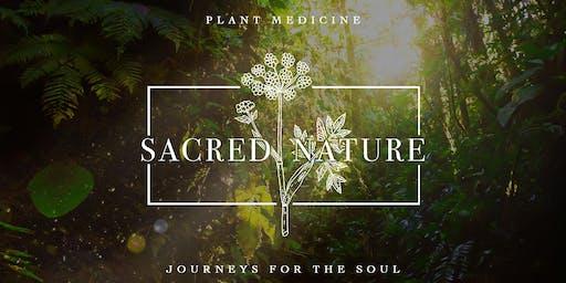 Sacred Plant Medicine Tour Ecuador - November 2019
