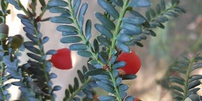 Zauber der Weihnachtszeit - Pflanzen, Märchen und Bräuche