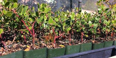 Propagating California Native Plants with Jordan Isken