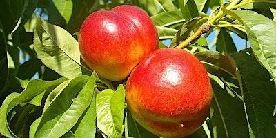 Healthy Fruit Trees