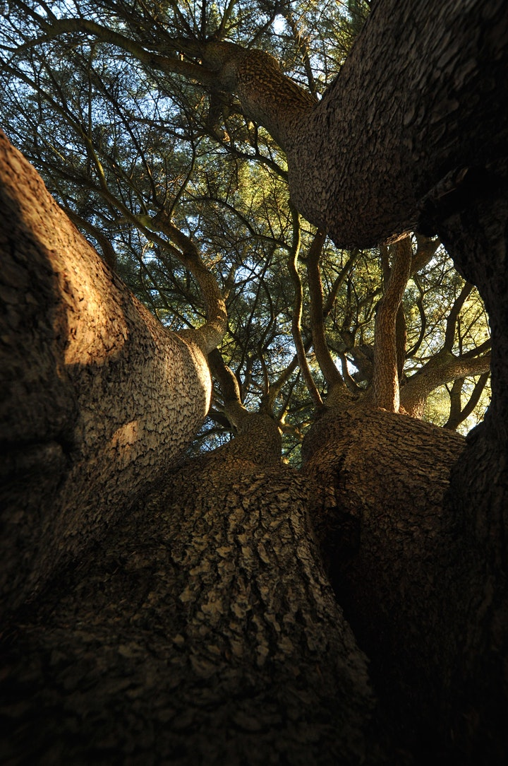 Nature Photography Workshop for Beginners - Richmond Park. image