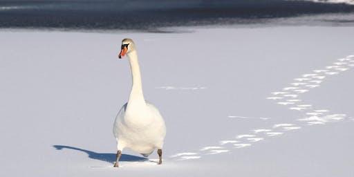 冬季野生动物追踪