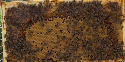 Beeginning Beekeeping Class