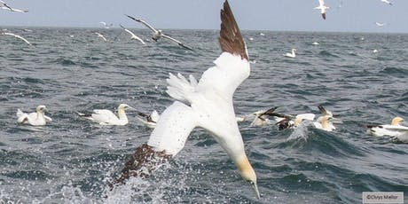 RSPB Diving Gannets Seabird Cruises, Bempton Cliffs 2019 tickets
