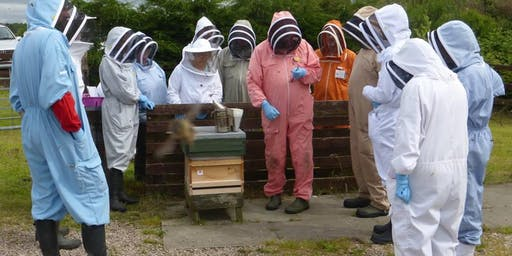 'Introduction to Beekeeping' course, 7 July