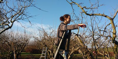 Pruning at Forest Farm Peace Garden (London)