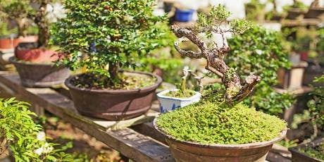 Masterclass: The Art of Bonsai. Sunday 10th November 2019 tickets