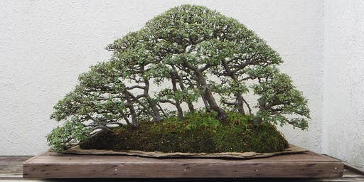 Masterclass: Australian Native Bonsai. Sunday 27th October 2019