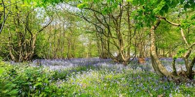 Photography Workshop - Danbury Woods in Spring