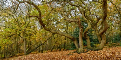Photography Workshop - Danbury Woods in Autumn