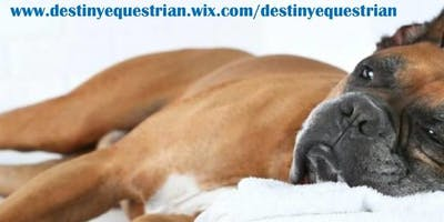 Canine Massage Certification Course