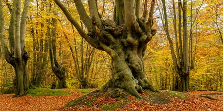 Photography Workshop - Epping Forest in Autumn tickets