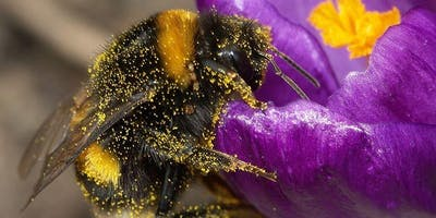 Converting Your Lawn Into a Pollinator Paradise