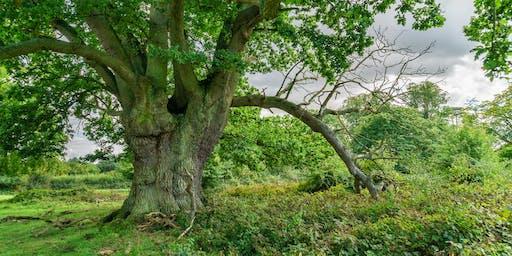 Photography Workshop - Hatfield Forest in Autumn