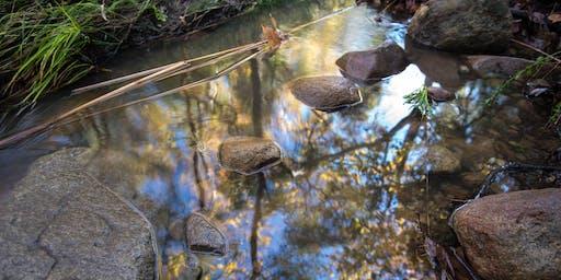 Discover Elfin Forest w/ Donna Walker