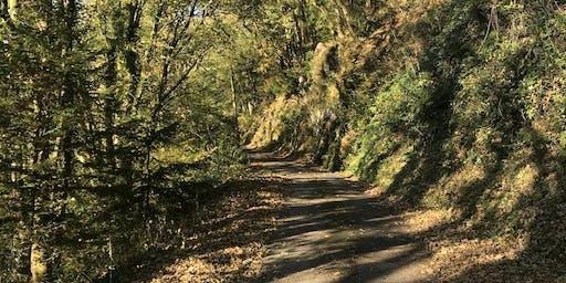 Llandysul New Year's Eve 10km & 5 km Run 2019