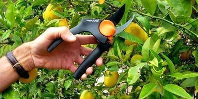 Fruit Tree Pruning Workshop - CLASS IS CANCELLED