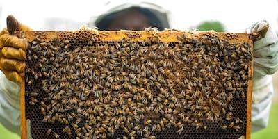 Beekeeping 101
