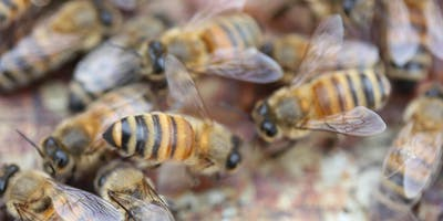 Keeping Honeybees - An Introduction Workshop for Beginners