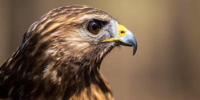 IJAMS Nature Nuggets: Predator and Prey