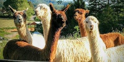 Alpaca Farm Day Visit Gift Certificate