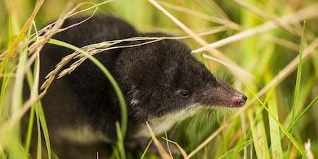 Mammal Identification Weekend 2019 - Juniper Hall, Surrey  tickets