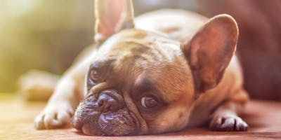 Lethargic? Give Back that Get-Up- and-Go!! (for Pets)